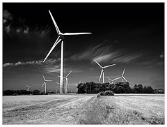 wind farm (kurtwolf303) Tags: windpark windfarm monochrome germany deutschland windrder bw sw olympusem1 omd microfourthirds micro43 schleswigholstein 250v10f topf25 topf50 unlimitedphotos systemcamera europe 500v20f topf75 topf100 750views 900views 1000v40f 1500v60f topf150 2000views topf200 2500views