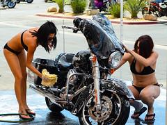 Cycle Wash (jetdragger) Tags: motorcycle outside tattoo girl wash bikini harley davidson
