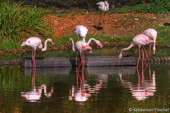 HDR Ouwehands Dierenpark Rhenen 2016 (Sebastiaan Fisscher) Tags: hdr ouwehands dierenpark rhenen 2016 sfisscher