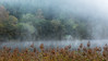 Boathouse (rgcxyz35) Tags: trees lochs trossachs water morning autumn mist boathouse lomondtrossachs scotland lochard