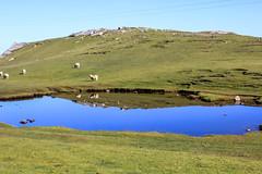 IMG_9629 (DaveGifford) Tags: strathy scotland unitedkingdom sheep