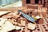 21110026 (alexdotbarber) Tags: 11000 35mm acmebrick kodakgold100 nikon50mmf14 nikonf slr bokeh bricks colornegative construction f28 unmeteredprism