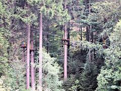 P8234098e (topzdk) Tags: treeclimbing summer 2016 czechrepublic ski slope lanovy park