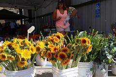 Sunny flowers (ponz) Tags: california orangecounty orangefarmersmarket scottkelbyworldwidephotowalk scottkelbyworldwidephotowalk2016 downtown farmersmarket flowers oldtown oldtownorange orange photowalking shopper sunflower lrexportviajf