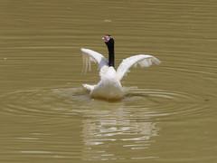 P2230527 (Gareth's Pix) Tags: aviarionacionaldecolombia baru colombia aviario bird