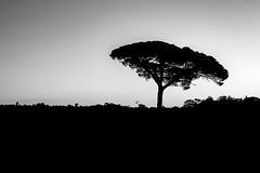 2309 (1 sur 4) (CDZ Photo Graphique) Tags: arbre bouaye levdesoleil vigne
