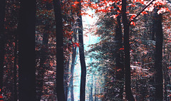 First day of Autumn (red.fox.child) Tags: forest nature trees autumn spirit season seasons woods fog mist wilderness wildlife wander leaves sun light dark contrast colors red