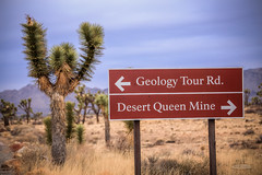 IMG_1537 Joshua Tree (Alex Hsieh ()) Tags:  joshuatree joshuatreenationalpark nationalpark california ca roadtrip 2016 usa travel desert canon6d canon 6d