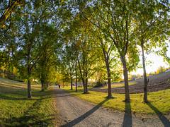 Jatilanraitti (MikeAncient) Tags: mntsl suomi finland syksy syyskuu fall autumn foliage puu puut tree trees syksynlehdet september tie road geotagged