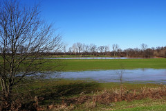 Foreman - Flooded Fields (Drriss & Marrionn) Tags: foreman arkansas usa nature outdoor landscape redriver riverside plant plants tree trees water stream flood field grassland plain sky skies grass river wet wetfeet bluesky