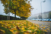 Morning | Autumn 2016 #277/365 (A. Aleksandravičius) Tags: morning leaves yellow colors fog autumn 2016 lietuva lithuania nikon nikkor 50mm 50 365 365days 3652016 d810 nikond810 50mmf14g nikkor50mm nikon50mm14g f14g nikon50mm project365 277365
