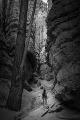 Adventure (nstoop) Tags: stone path utah adventure mysterious tree canyon nationalpark bryce rock dangerous girl unknown narrow blackwhite