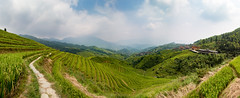 The (a)Mazing Longji Rice Terraces Large Panorama - Guilin - China (Rogg4n) Tags: china longji longjiriceterraces guilin canoneos100d rice iconic hills nature forest mountains landscape longsheng guangxi travel efs1018mmf4556isstm field asia culture agriculture panorama lines geometry terrace path bamboo