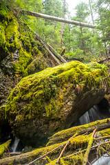 DSCF4370 (LEo Spizzirri) Tags: bevin morgan peter odin huck huckleberry shug cabin northwest seattle forest pacific mushroom moss josh betsy ladder green thick