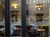 Cat Cafe, Budapest (mister_wolf) Tags: budapest cafe cat catcafe hungary pest