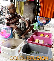 People of Jakarta #4 (Colourfusion.net) Tags: people person street photography jakarta djakarta matthiasgeffert exploring outdoor locals selling turtles mice man guy pets animals indonesia