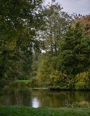 941A3606 (Orrellpenguin) Tags: orrell water park billinge winstanley