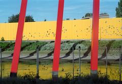 / / / (purple camel) Tags: road leica city red urban film birds yellow cheese analog 35mm 50mm mt australia melbourne victoria summicron freeway stick analogue tollway dual alexander range m4 rd citylink tullamarine leitz saaahindie icanhazcheezestick