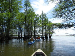 Lowcountry Unfiltered - Lake Marion Ghost Town Paddle - April 2013 (282) (greenkayak73) Tags: friends beagle nature america fun lucy southcarolina adventure kayaking ghosttown mrrussell riverdog lakemarion greenkayak73 randomconnections photopaddling lowcountryunfiltered nitrorev johnatgcc rockscemetery