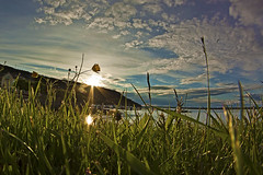 Buttercup at sunset (magnusl67) Tags: sunset summer reflection green grass buttercup sweden jmtland sunflare frsn stersund canoneos50d samyang8mm magnuslgdberg
