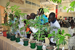 Staff and relations examining tree plant seedlings at Open Day 2012 (IITA Image Library) Tags: relations audiences recreationalactivities openday2012