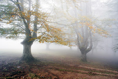mysterious and foggy forest (Mimadeo) Tags: park wood morning light sunlight mist tree nature wet sunshine misty fog mystery forest landscape leaf haze mood ray branch shine foggy mysterious horror trunk nightmare unreal hazy twisted beech