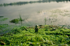 o-) (TTkc :)) Tags: color film nature monster canon lomography lego ae1 outdoor 28mm 400 28 mythology argentique fd minifigure analogic