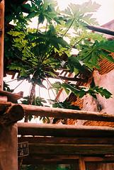 F1000012_lr (chi.ilpleut) Tags: green film june island chrome analogue  kodakfilm 2016 kodakelitechrome100   kinmentaiwan oceanpeopleisland