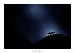 Le guerrier de la nuit (Naska Photographie) Tags: naska photographie photo photographe paysage proxy proxyphoto macro macrophotographie macrophoto insectes extrieur nocturne nuit night mouche nature sauvage