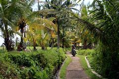 IMG_0282 (Marta Montull) Tags: holidays indonesia canon gopro malaysia kuala lumpur bali gili islands rice terraces temples monkey travel photography landscape