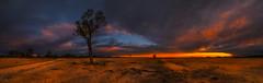 Alone I Stand (MartinHroch) Tags: panorama australia newsouthwalles nsw nature landscape martinhroch outdoor tree wasteland sunset skytrails deadtrees plain plateau orange nombinnienaturalreserve