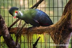 Parque das Aves (Stefan Lambauer) Tags: fozdoigua parquedasaves bird tourism turismo parquenacionaldoigua stefanlambauer 2016 brasil brazil paran br