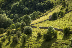 Barn on steep slope (Keartona) Tags: staffordshire slope barn rural countryside dovedale summer trees green greenery steep england english landscape sunshine august stone walls