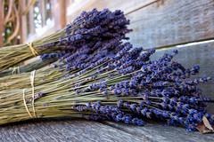 Bundle of lavendar (fongpei) Tags: lavendar sequim washington flower unitedstates