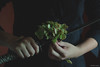 whim II* (M.B.*) Tags: canon photo wolfskurai hydrangea whim languageofflowers hands katana melancholy