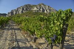Vignoble des Baux (Michel Seguret Thanks all for 8.900 000 views) Tags: bauxdeprovence dans les alpilles bouchesdu rhne francevigne vines wineyard weinberge michelseguret nikon d800