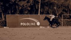 20160814194455 (Federico Alberto) Tags: santamarapoloclub polosotogrande sotograndepolo es espagne espaa polo sotogrand spain olympus omd em1 panasonicleicadgvarioelmar100400mmf463asph horses caballos chevaux cdiz andalusia dubaipoloteam goldcup nophotoshop nohdr