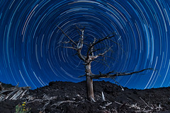 Star Trail sull'Etna (Ondablv) Tags: star trail foto night striscia scie polare stella stelle cadenti lavica nero abrustolito bruciato coocked cotto tree spoglio lingue colata lava etna sicilyetna sicilycatania sicilyetnaeruption sicilymountetna mountetnaeruption mountetnaerupting volcanoetnaeruption volcanoetna etnaeruption etnaerupts etnalava etnaeruption2014 pianoprovenzano panorama sfondo spettacolare natura paesaggio paesaggi immagine immagini canon canon70d 70d image images photo photos nature ondablv photography postcard postcards landscape tag vulcano etnas volcano vulcan etnailvulcano ilvulcanoetna eos tronco
