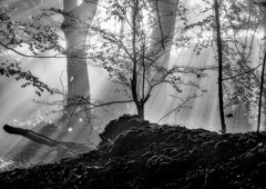 Intensity (jactoll) Tags: broadway worcestershire cotswolds fog foggy mist misty morning light rays woods trees sony a6000 zeiss 1670mmf4 jactoll