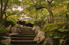 Up the steps (Tim Ravenscroft) Tags: stairs steps foliage trees tofukuji temple kyoto japan