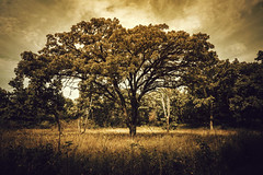 Artifacture (Anthonypresley1) Tags: illinois marengo park conservation tree trees nature landscape sepia leaf leaves old retro vintage anthony presley anthonypresley gloom dark artifacture light sky clouds cloud