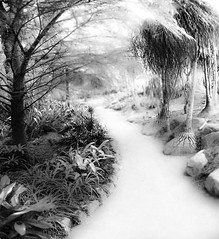 walk this way (Noel Leone--my reality in and out of focus) Tags: path strange bw bn desertplants monochrome surreal real walkthiswayifyoudare notir lotuslandmontecitoca