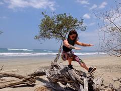 Costa Rica ... Nosara (jaclynd1) Tags: beach driftwood nosara costarica