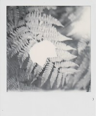 backyard textures (lydiafairy) Tags: day4 polaroid roidweek16 autumnroidweek16 impossibleproject bw blackandwhite sx70 grandpascamera fern fallleaves leaf held