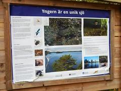 Information board about lake Yngern at Lvnsbadet (Flicker Classic Person) Tags: yngern lvnsbadet beach strand naturist nudist fkk sdertlje nykvarn sweden sverige safe 2016 board information lake text swedish svenska