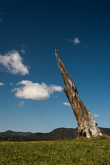 Lone Tree (James Gumb - Would You?) Tags: 52project2016 lightbox lonetree