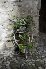 IMG_1421 (jsgcowley) Tags: europe italy sansebastiano plant colour texture lighting stonework