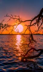 Grace of Beauty (JDS Fine Art & Fashion Photography) Tags: sunrise ocean sea beach tree water colors sun beauty naturesbeauty grace elegance