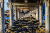 Bare Island- under the bridge (mohammad.hossain@y7mail.com) Tags: bareisland laperouse sydney australia bridge