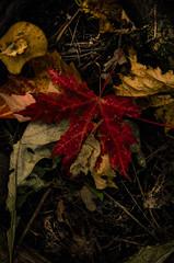 Fall keeps coming! (Kat Hatt) Tags: matchpointwinner mpt513